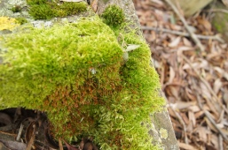 I just think moss of every kind is beautiful.